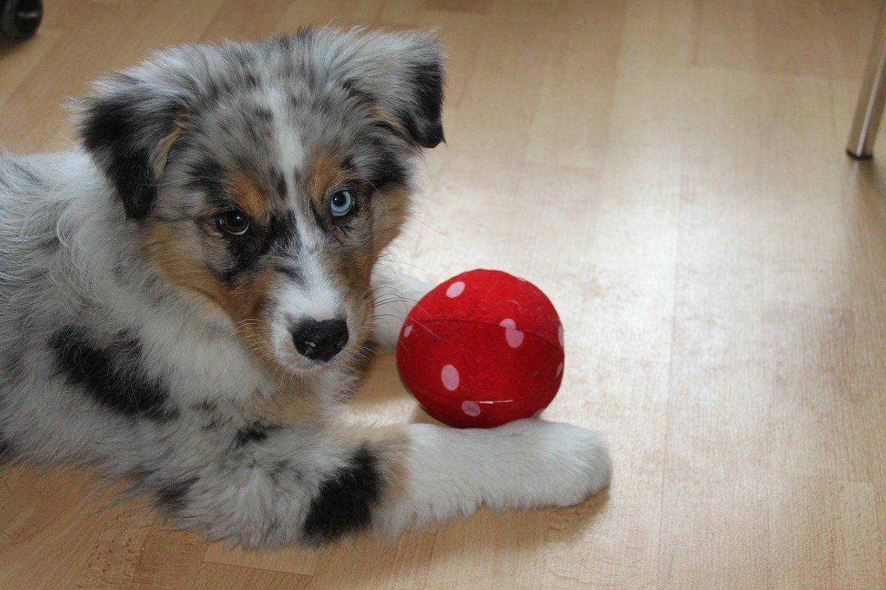 puppy-427137_1280