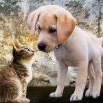 animals-2198994_1280