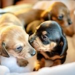 puppies-3687656_1280