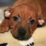 puppy-2086552_1280
