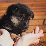 puppy-2814858_1280