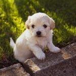 puppy-4234435_1280