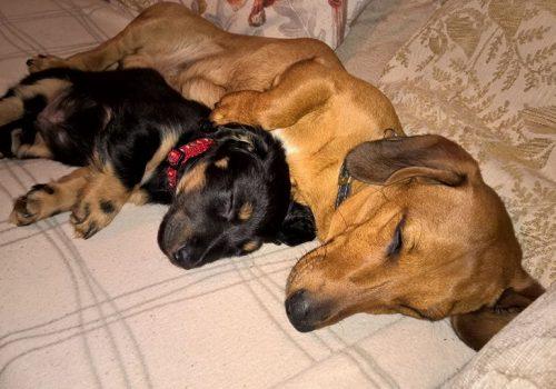 Toby and Freddie 1