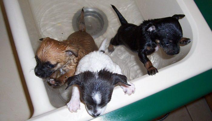 bath-time-1111748_1280