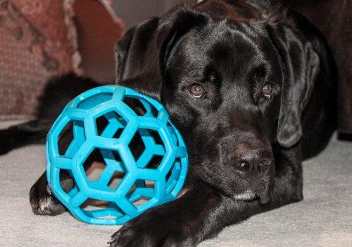 dog-1453739_1280