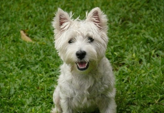 dog-2400814_1280