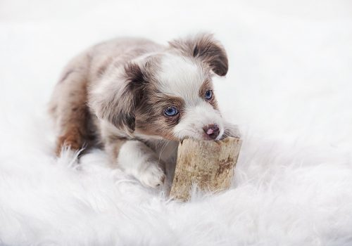 dog-3071189_1280