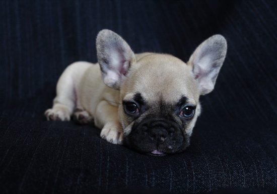 dog-3738255_1280