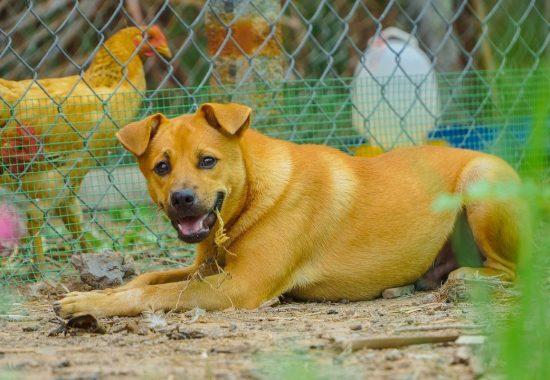 dog-5365146_1280