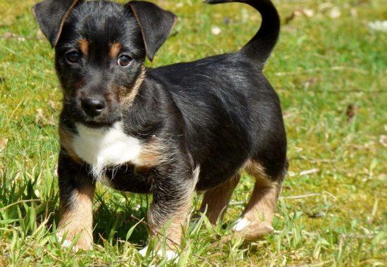 dog-710013_1280