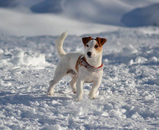 dog-716684_1280