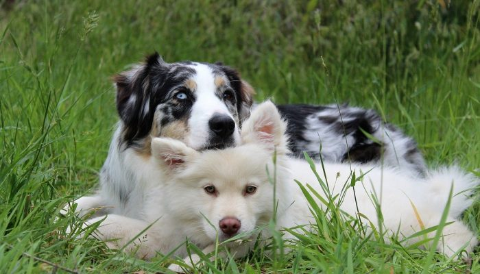 dogs-1790046_1280