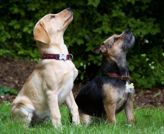 dogs-930727_1280