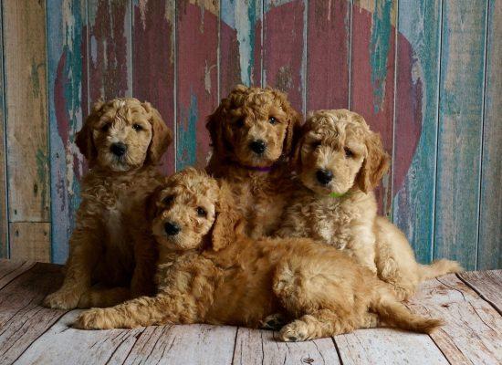 puppies-2044168_1280
