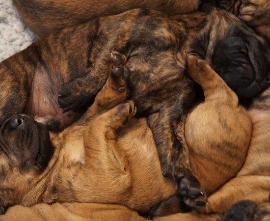 puppies-4557297_1280