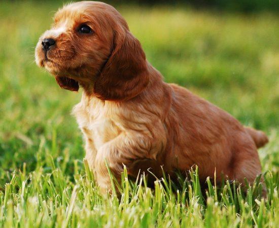 puppy-2414187_1280