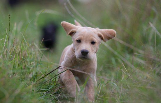 puppy-2642352_1280