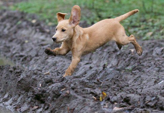 puppy-2642360_1280