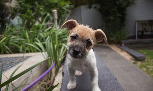 puppy-406163_1280