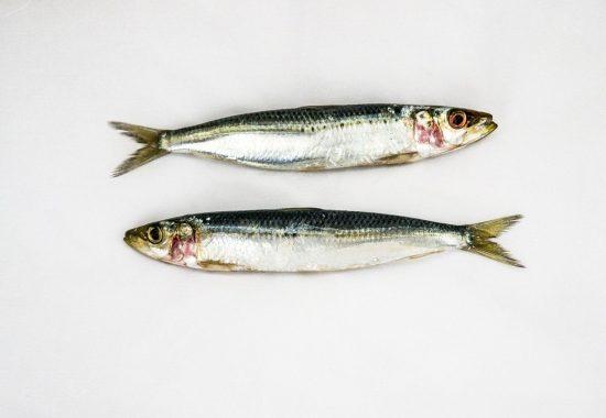 sardines-3732726_1280